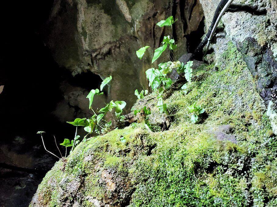 千仏鍾乳洞を進んで「無限天」を通過して進んだ先にある緑