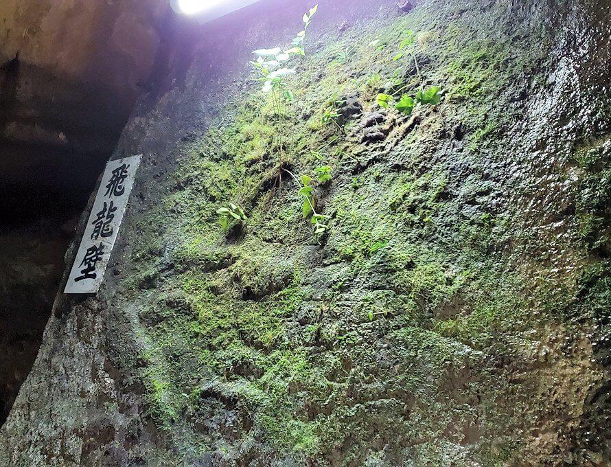 千仏鍾乳洞内で育んでいる緑-1