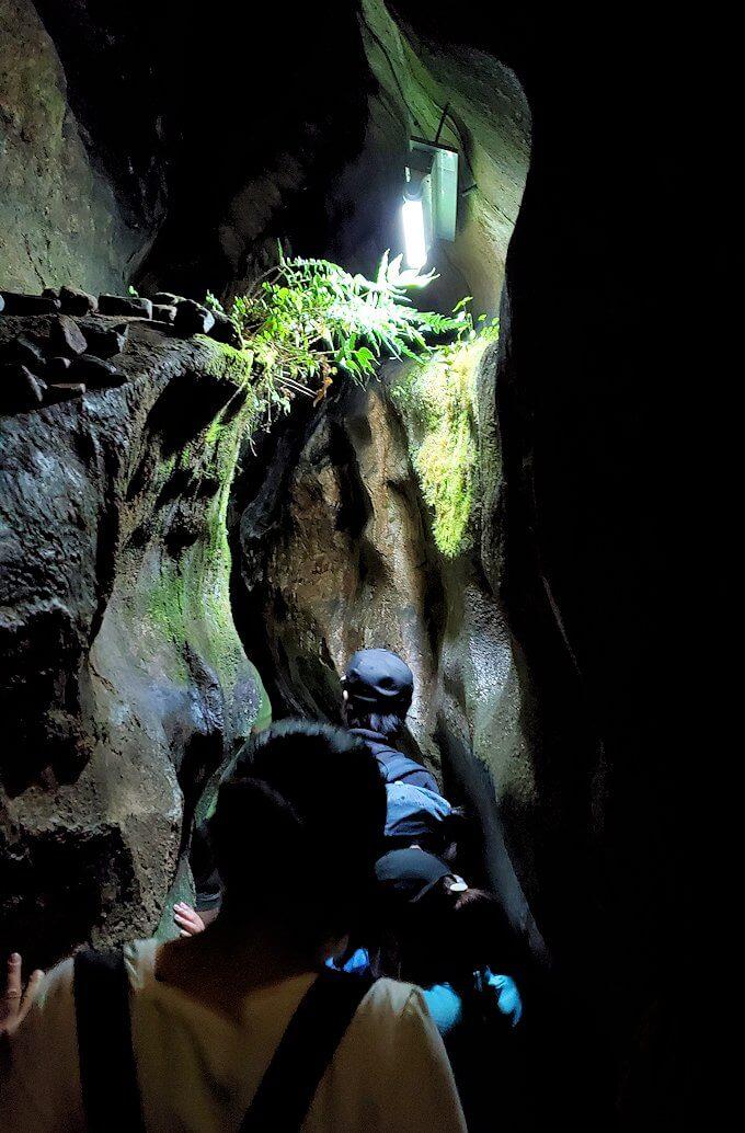 千仏鍾乳洞内で育んでいる緑-2