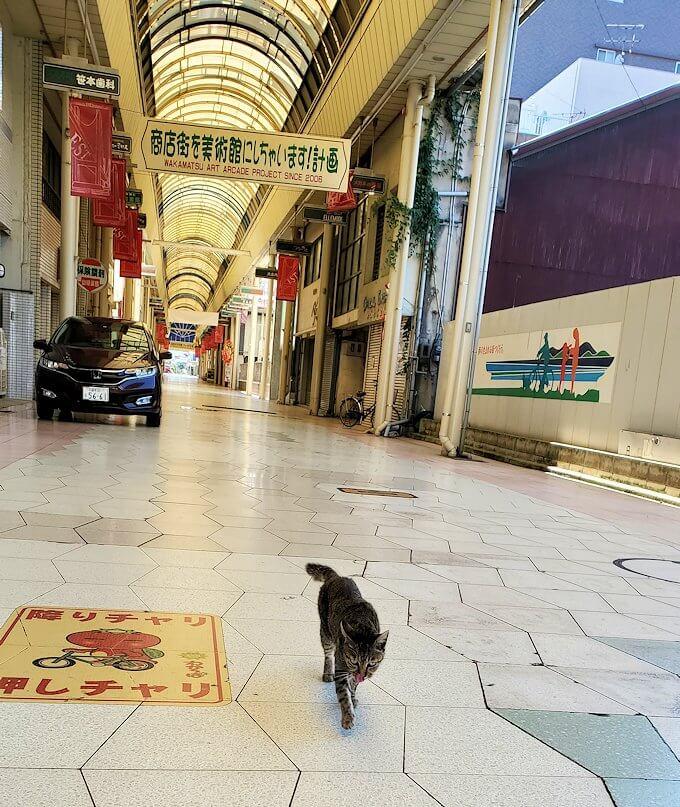 北九州市若松区にある商店街で寄ってきた猫ちゃん