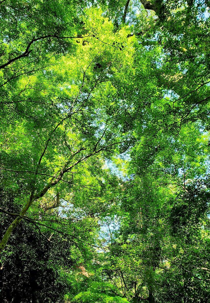 宇佐神宮の境内に溢れる緑