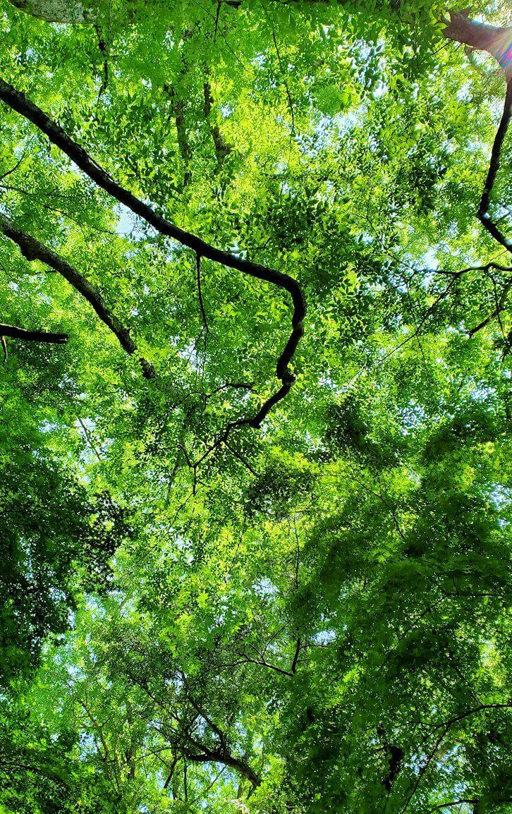 富貴寺境内に咲く木々