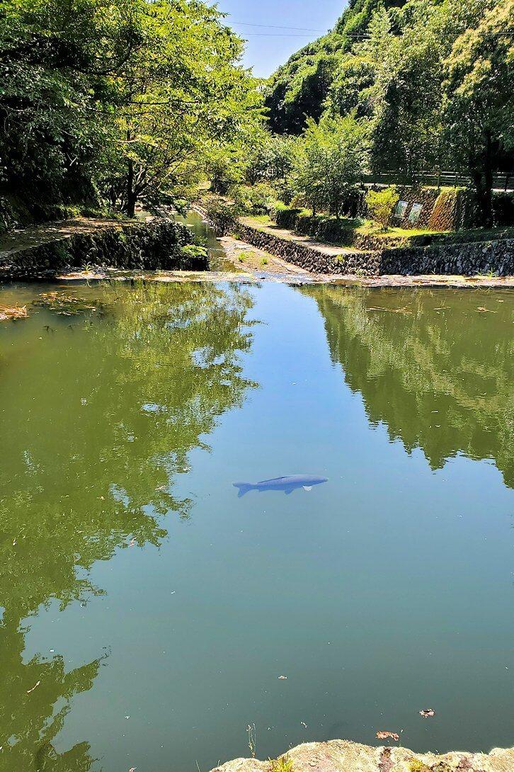 天念寺前を流れる、長岩屋川-3