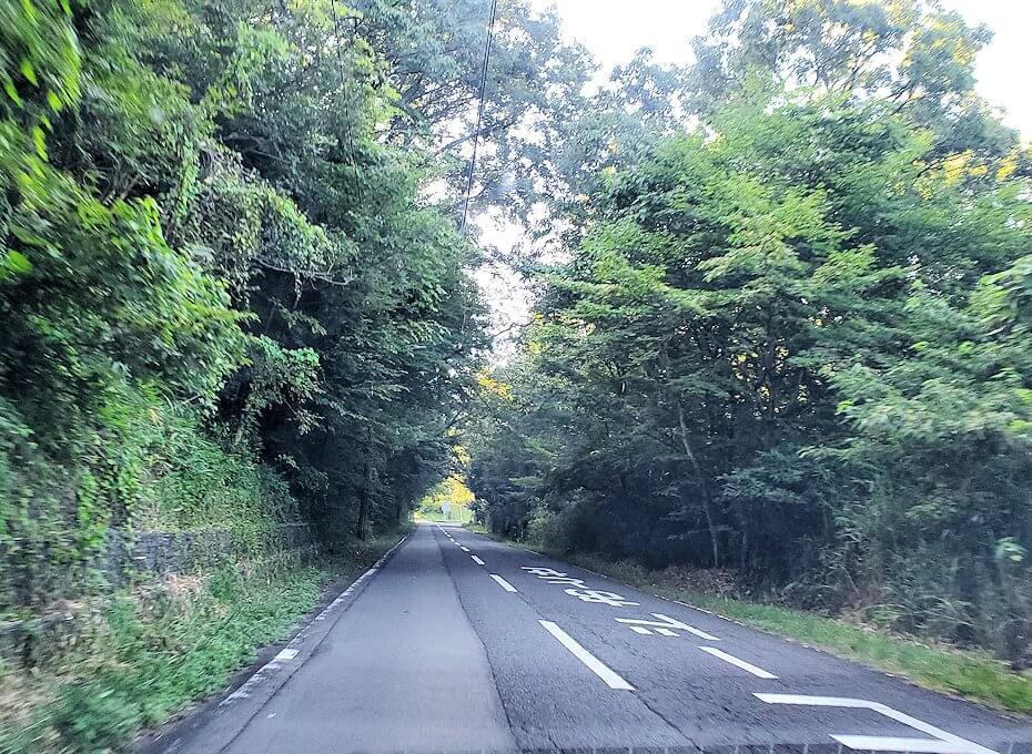 別府の街を出発し、緑に覆われた道を進む