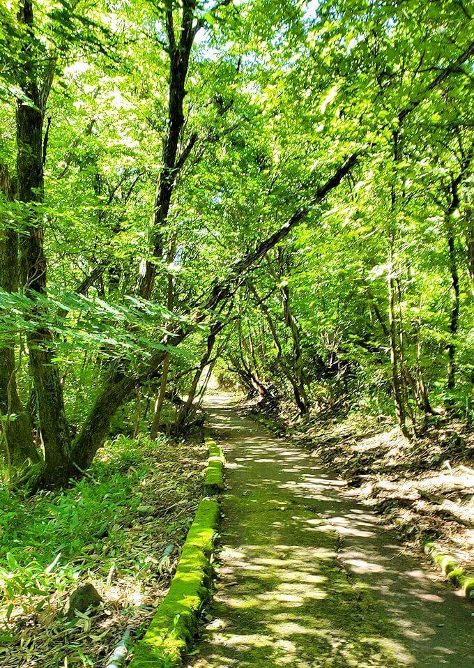 長者原の休憩所周辺の川沿いを散策