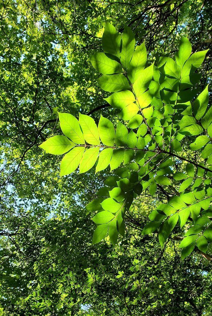 長者原の休憩所周辺の川沿いを散策して見えた緑