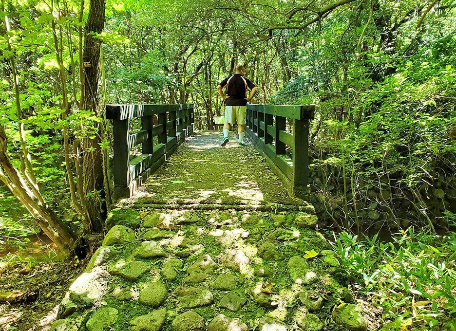 長者原の休憩所周辺の川沿いを散策-2