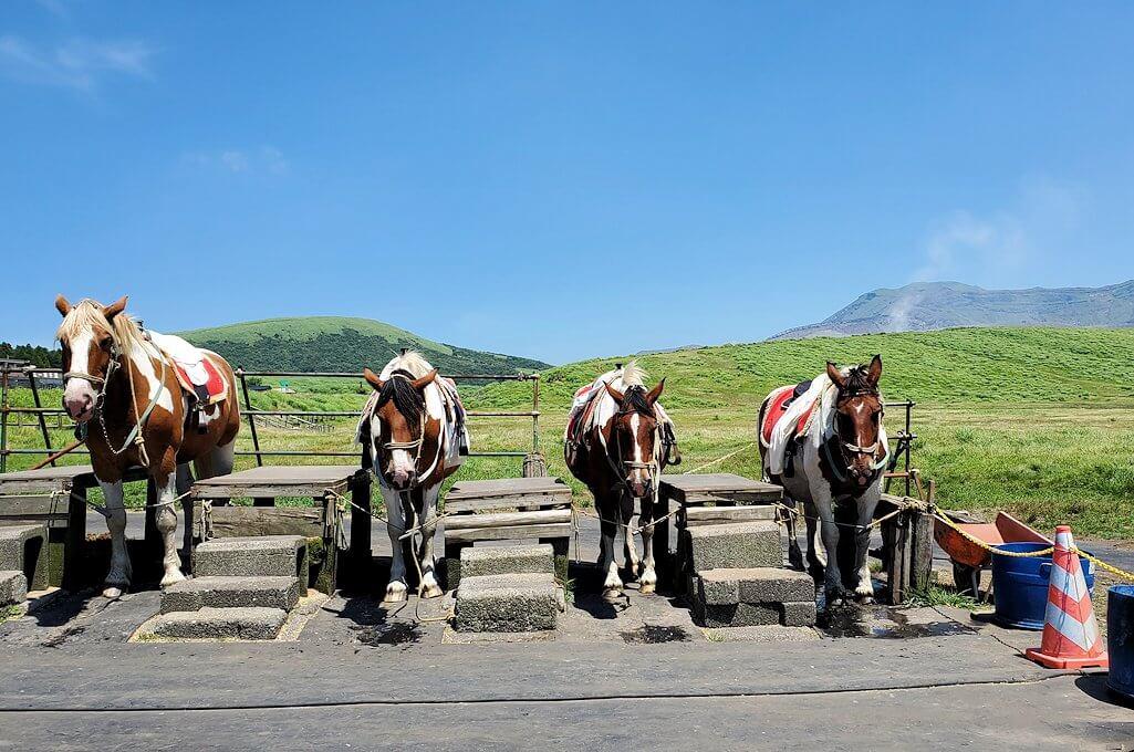 阿蘇の草千里ヶ浜の丘にある乗馬場にいた馬たち