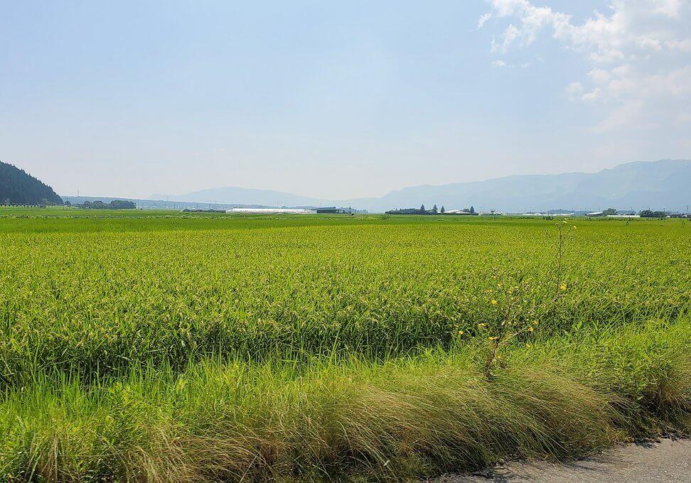 阿蘇山から町へと向かう道中