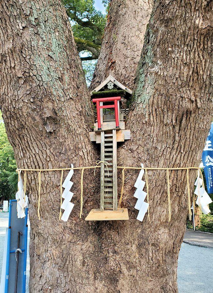 熊本城内にある加藤神社にある大きな木には祠が造られていた