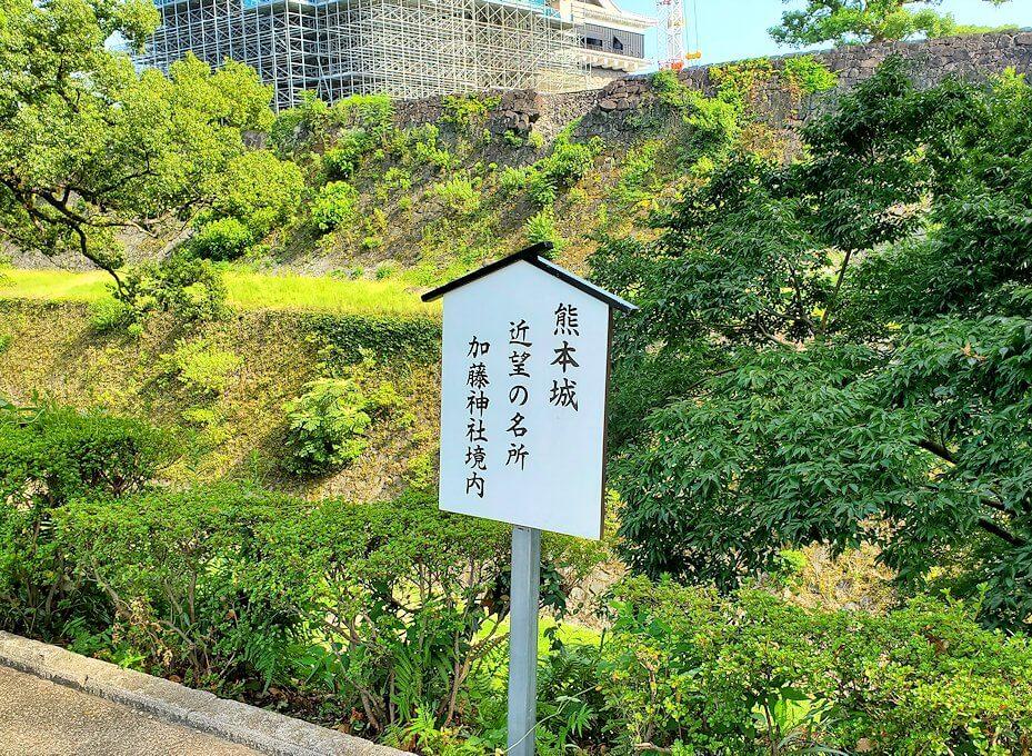 熊本城内にある加藤神社内から見えた本丸側に植えてある植物