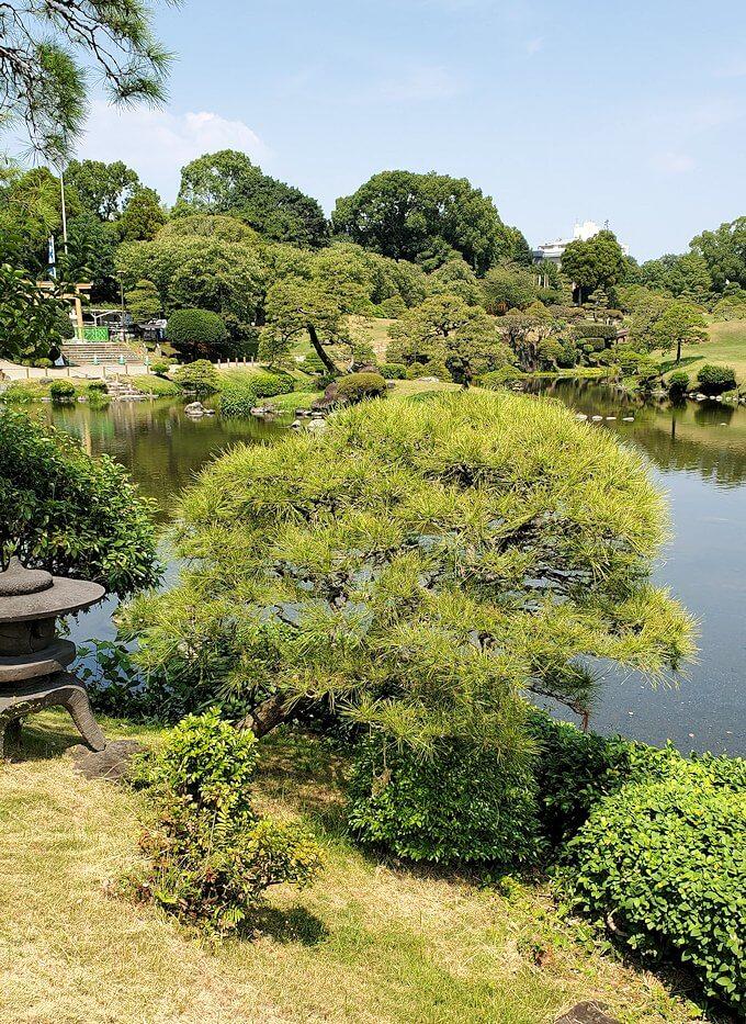 水前寺成趣園にある松