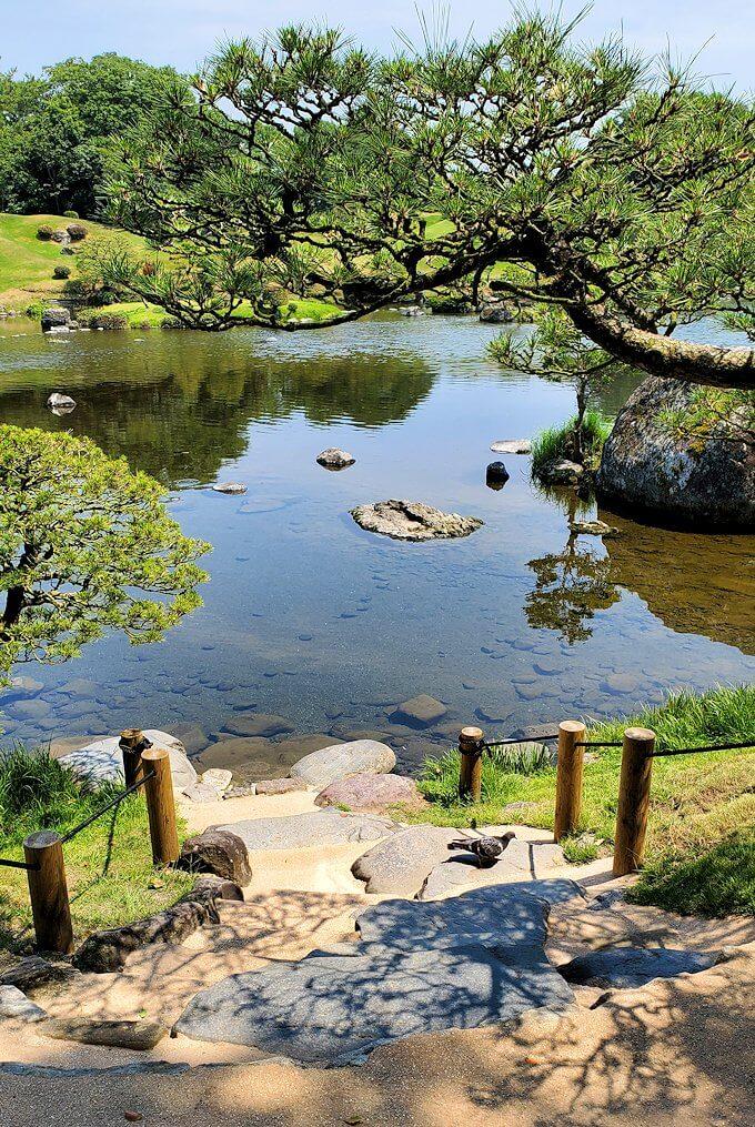 水前寺成趣園にある松-1