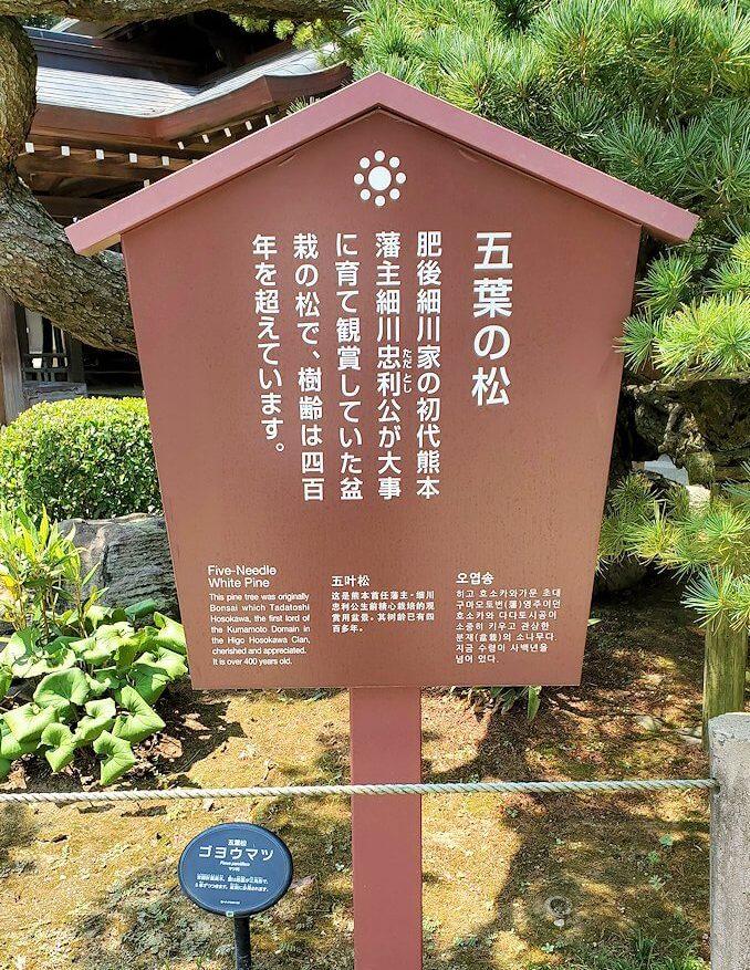 水前寺成趣園内の石橋から庭園にある出水神社の社殿横にあった松の看板