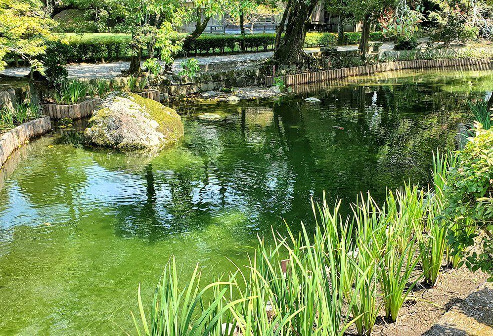 水前寺成趣園内の池を眺める