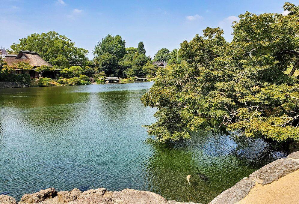 水前寺成趣園内の池を眺める-1