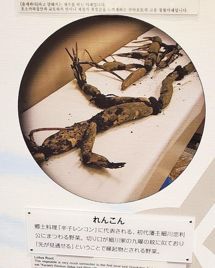 「くまもと森都心プラザ」にある郷土情報センターにあった熊本県の蓮根のパネル