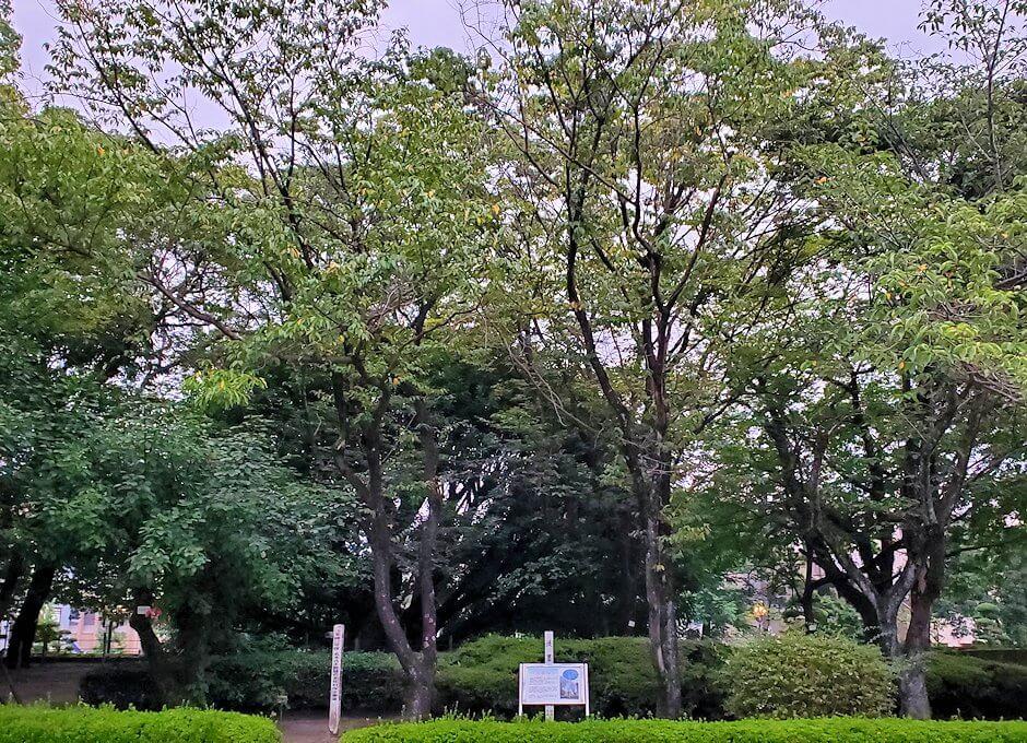 鹿児島県立図書館の鶴丸城跡地の景色