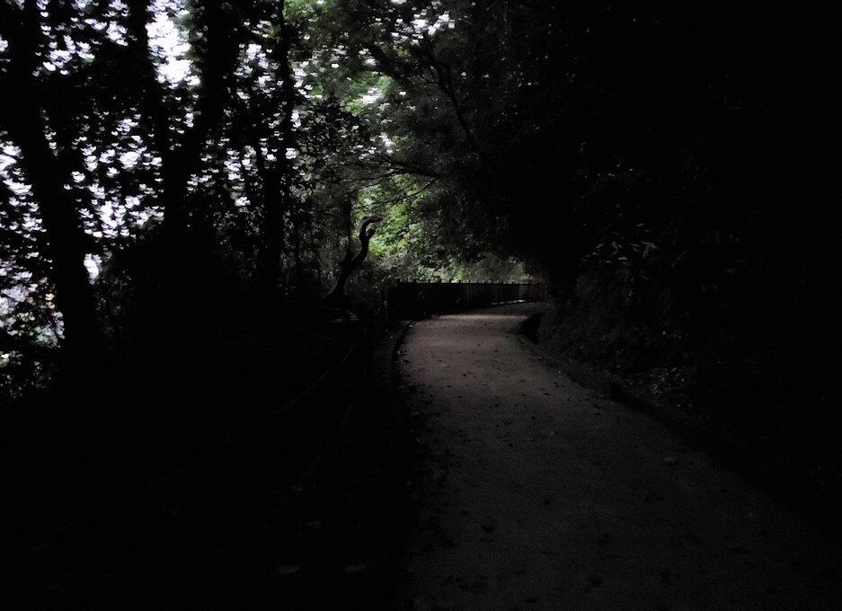 城山遊歩道を登っていくとだんだん暗くなってくる-1