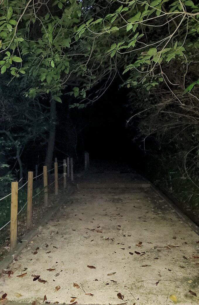 城山遊歩道を登っていく