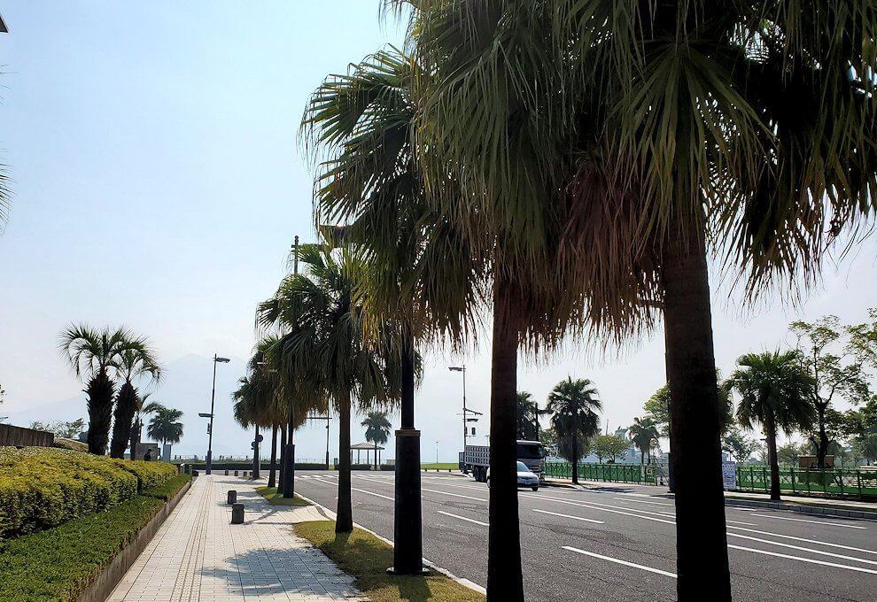 桜島フェリー乗り場近くにあるNHK前を進む