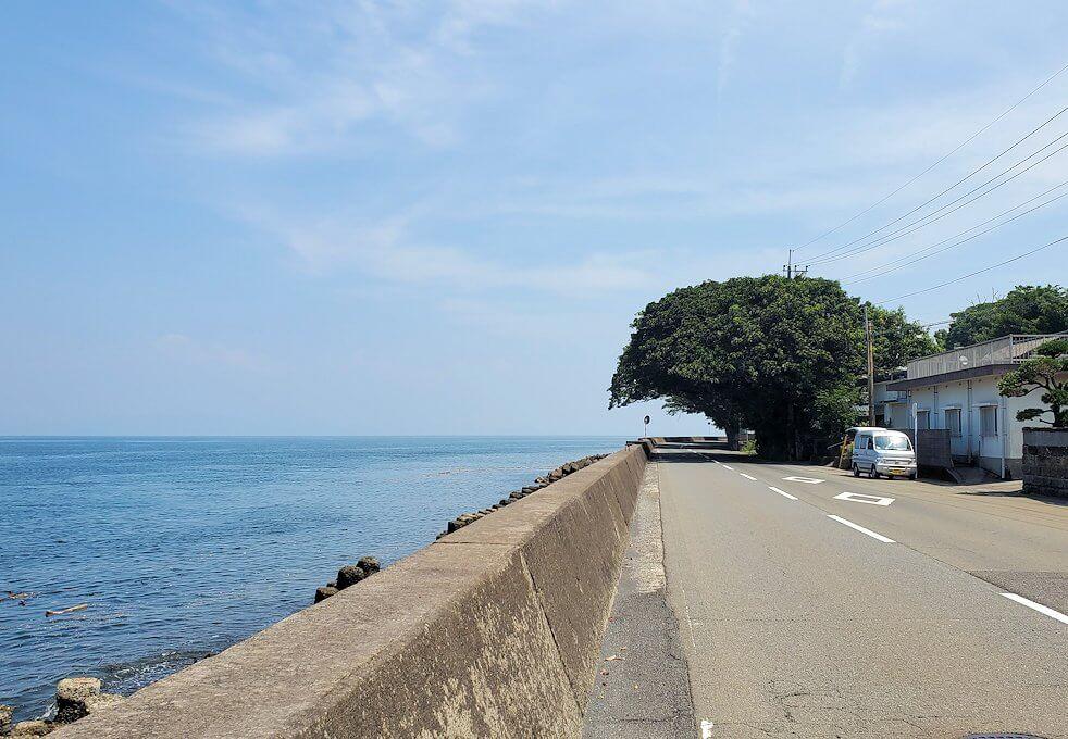 桜島にある写真スポット「藤野のアコウ群」が見えてくる