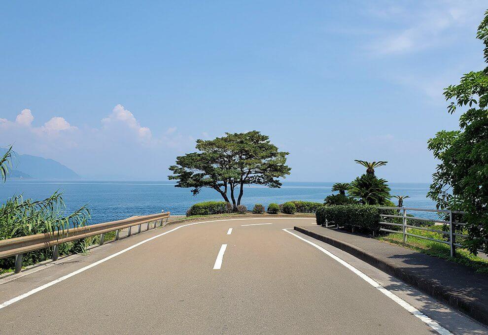桜島にある写真スポット「藤野のアコウ群」近くのクロマツ親水公園