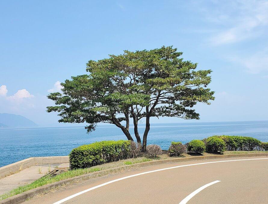 桜島にある写真スポット「藤野のアコウ群」近くのクロマツ親水公園-1