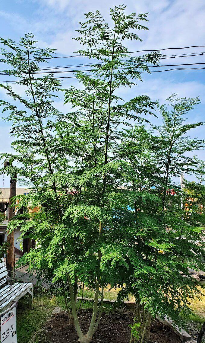 道の駅「垂水」の向かいにある「マミーズカフェ」で育てている植物