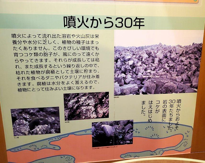 桜島ビジターセンターにある、噴火後の植生物の動向の説明
