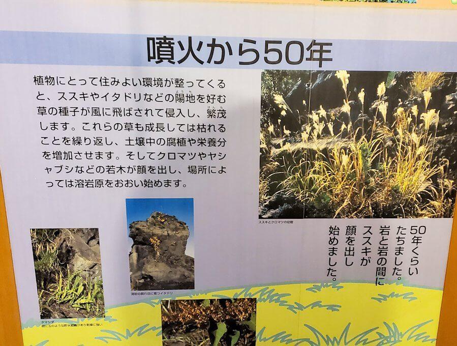 桜島ビジターセンターにある、噴火後50年の植生物の動向の説明