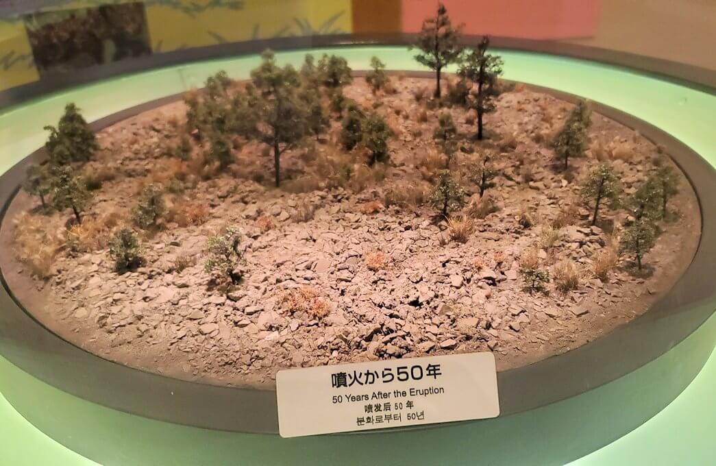 桜島ビジターセンターにある、噴火後50年の植生物の動向の説明-1
