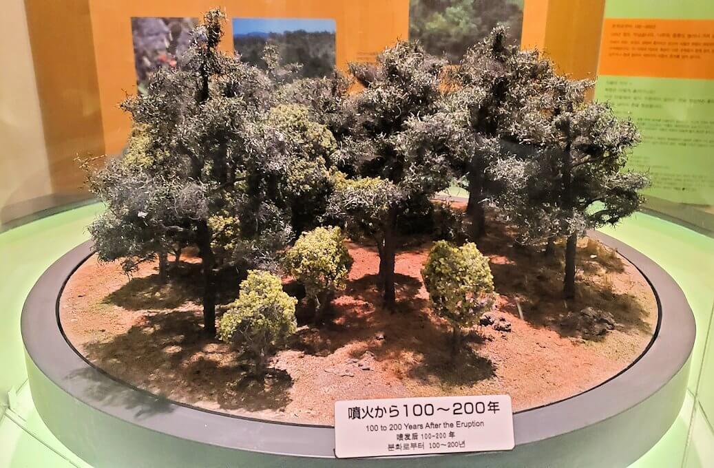桜島ビジターセンターにある、噴火後100年の植生物の動向の説明-1