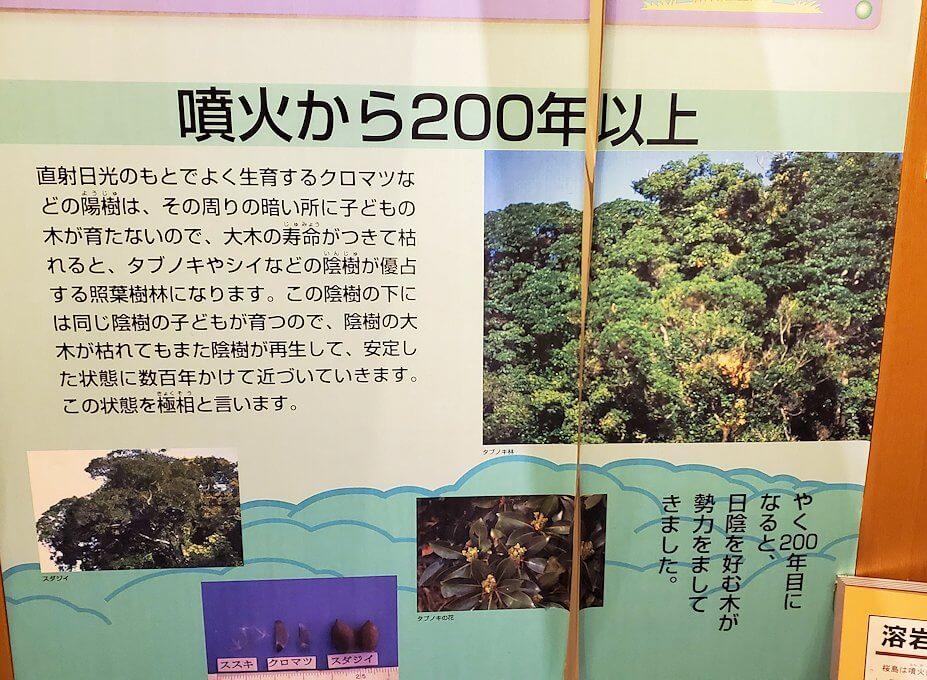 桜島ビジターセンターにある、噴火後200年の植生物の動向の説明