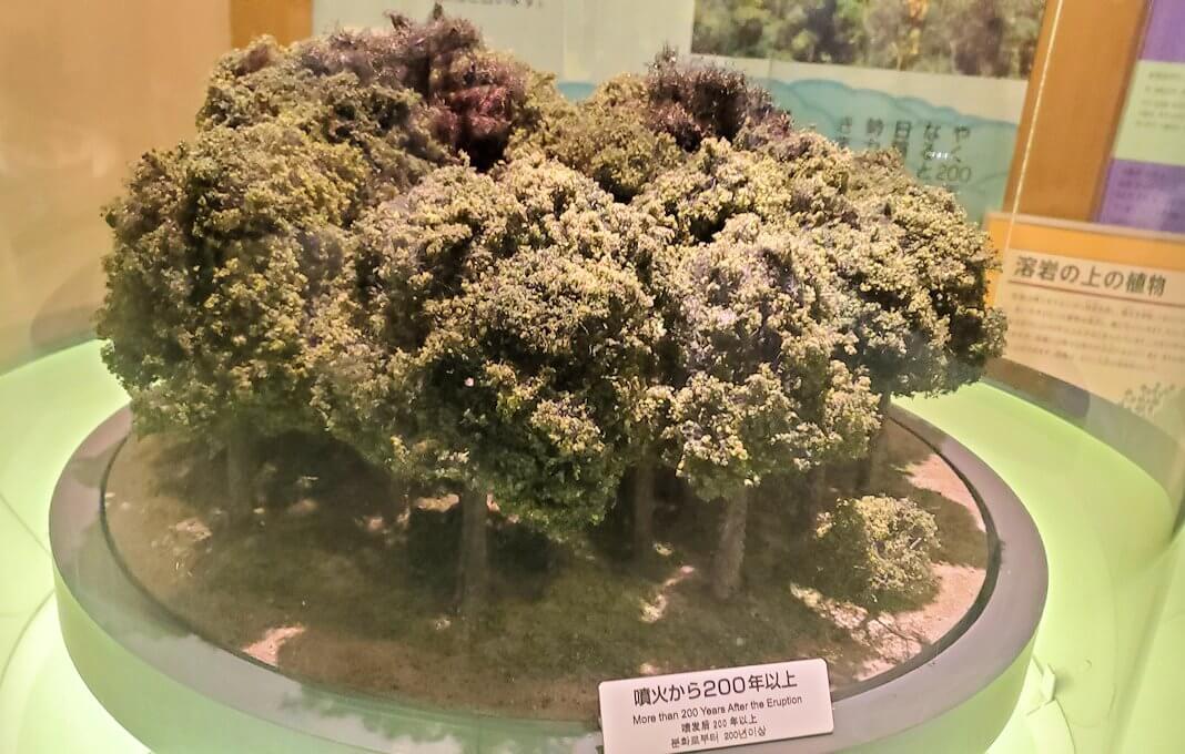 桜島ビジターセンターにある、噴火後200年の植生物の動向の説明-1