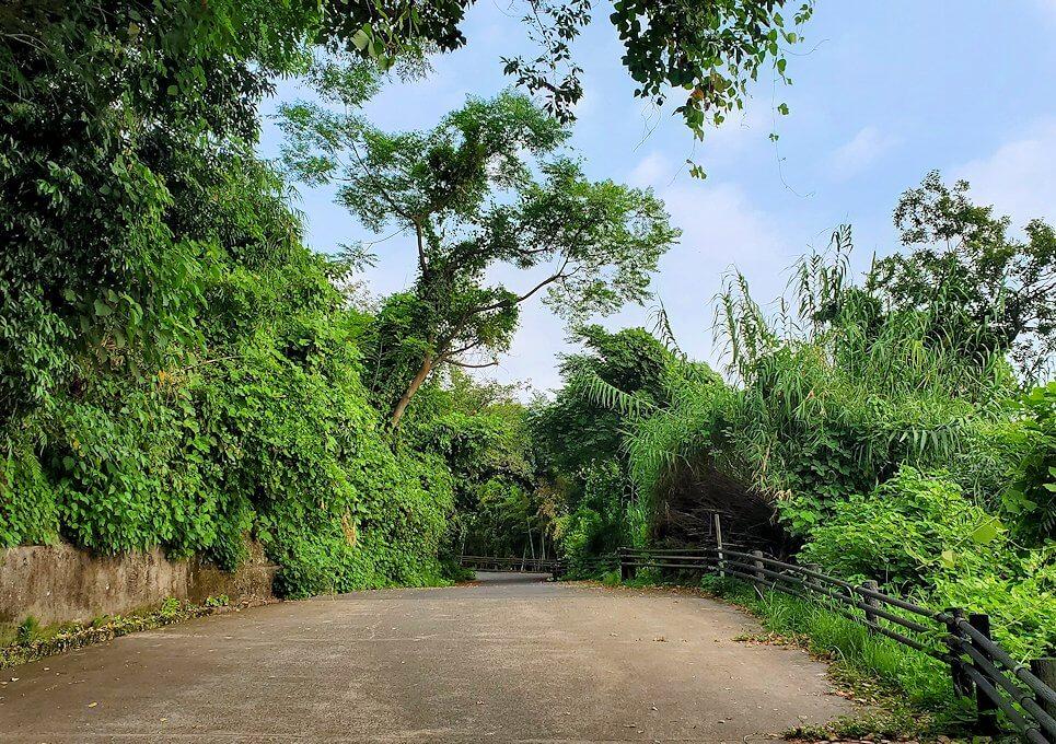 桜島自然恐竜公園へと登っていく