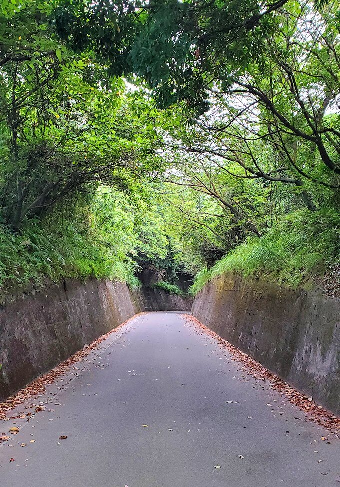 桜島自然恐竜公園を降りていく-1