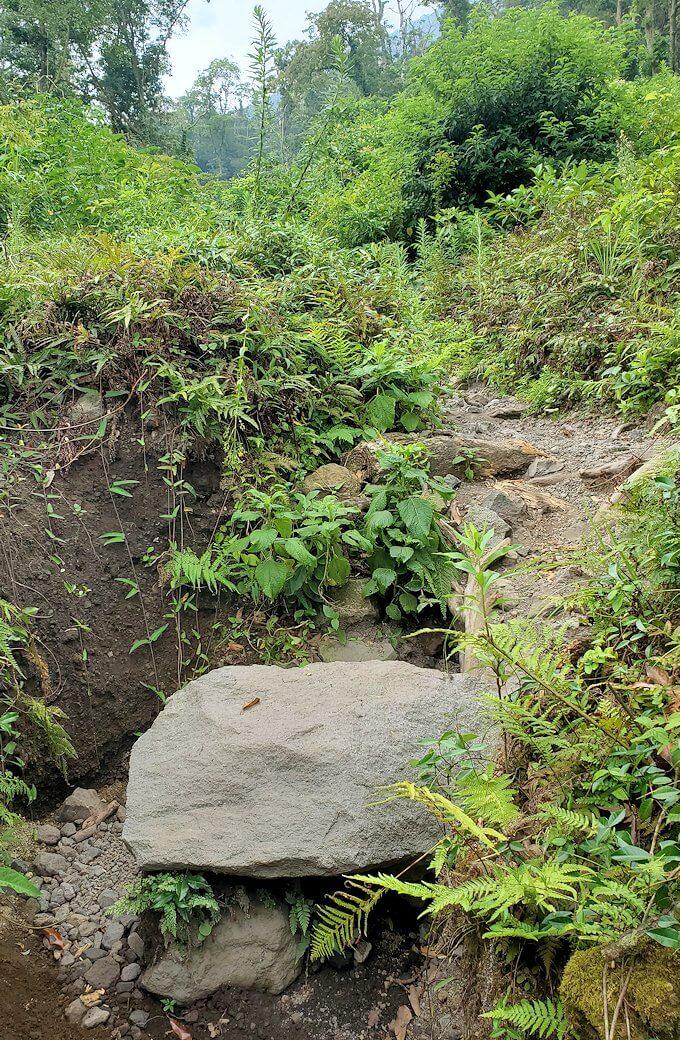 開聞岳登山道入り口を進む-1