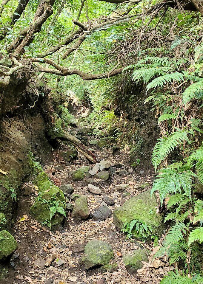 開聞岳登山道3合目付近から進んで行く山道