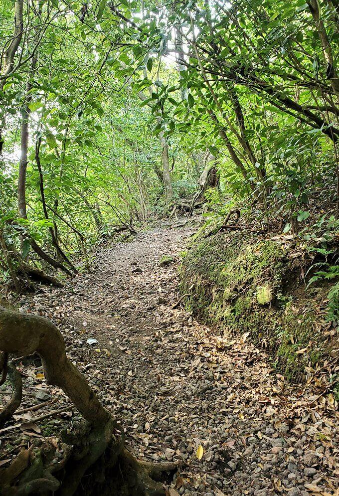 開聞岳登山道5合目から進む