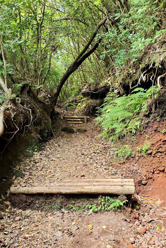 開聞岳登山道5合目から登りの道3