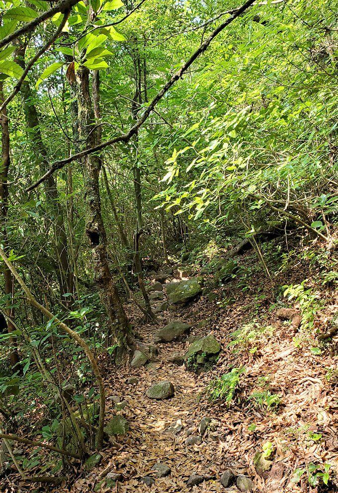 開聞岳登山道6合目から進む-2