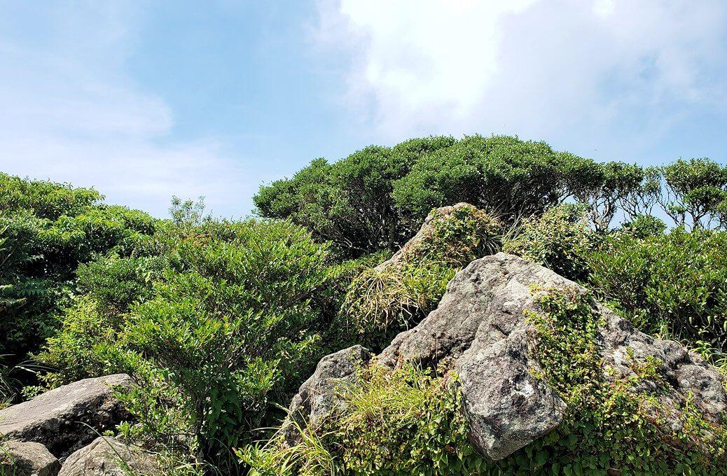 開聞岳頂の景色1