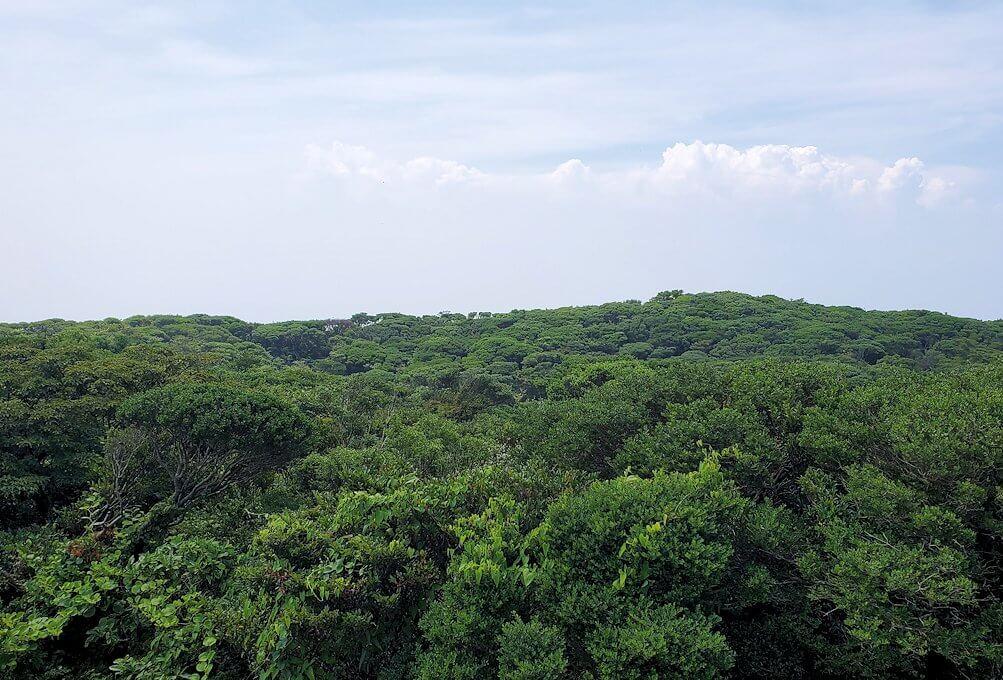 開聞岳頂上に茂る木々