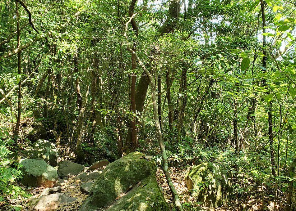 開聞岳をどんどん降りていくと広がる木々の景色