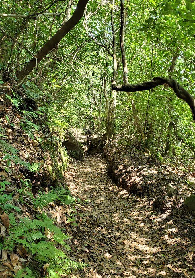 開聞岳をどんどん降りていくと広がる木々の景色1
