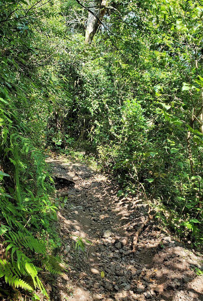 開聞岳をどんどん降りていくと広がる木々の景色2