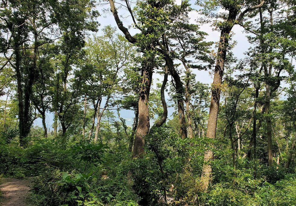 開聞岳下山途中2.5合目の景色1