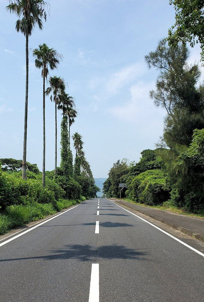 鹿児島ロマン街道を進み、ヤシの木が立ち並ぶ景色