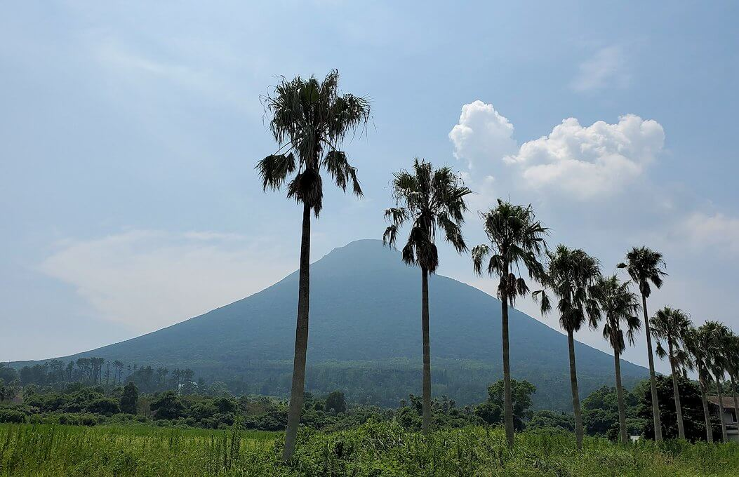 鹿児島ロマン街道でヤシの木と開聞岳が立ち並ぶ景色